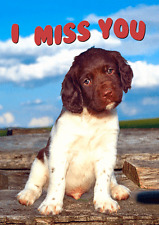 3D I MISS YOU - Spaniel Doggie - Lenticular Postcard Greeting Card