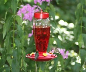 HOMESTEAD 24 oz. GLASS HUMMINGBIRD FEEDER, HS3918, MADE IN USA     #dm