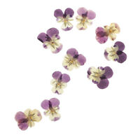 10pcs Natural Pressed Dried Pansy Flowers Embellishments For DIY Arts Crafts