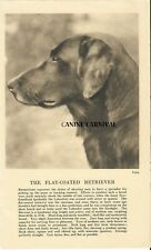 Flat Coated Retriever Dog Head Rare Vintage Art Photo & Breed Description 1931