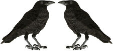 Raven - American Black Crow - Embroidered Iron On Patches - (SET OF 2)