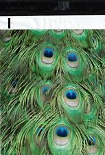 100 10x13 Peacock Feathers Designer Poly Mailers Envelopes Boutique Custom Bags