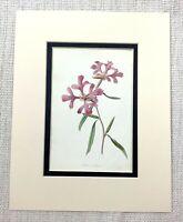 Antico Botanico Stampa Rosa Rosy Clarkia Fiore Bloom Floreale Art Ca. 1913