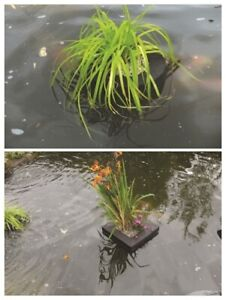 PondXpert Floating Planter for Pond Plants - @ BARGAIN PRICE!!!