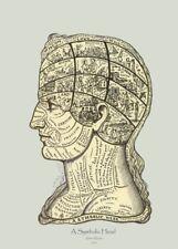 A Symbolic Head, Arthur Merton, 1879, Vintage Anatomy Phrenology Poster