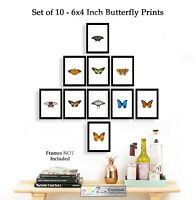 Set of 10 Butterfly 6x4 Photo Picture Prints ONLY Wall Art Wildlife Butterflies