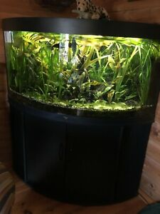 aquarium komplett mit unterschrank gebraucht Trigon350