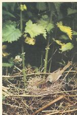 x animals birds antique old postcard bird animal whitethroat and young