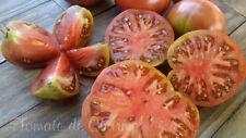 10 graines de tomate bio rare LAVENDER LAKE idéale pour les climats frais