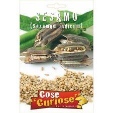 Semi Seeds Cipresso CYPRESS semence semilla samen zaad シード семена