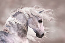 STUNNING CANVAS WHITE HORSE #42 QUALITY CANVAS WALL HANGING PICTURE ART A1