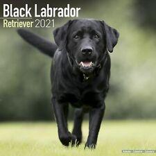 Labrador Retriever Black Calendar 2021 Premium Dog Breed Calendars