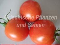 🔥 Tomate Tomaten Frühzauber 10 frische Samen früher reicher Ertrag Balkon Kübel