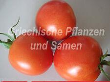 🔥 Tomate Tomates frühzauber 10 graines fraîches autrefois riche rendement Balcon Bac