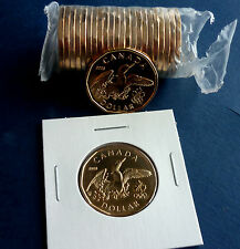 "2008 Canada ""Lucky Loonie"" 1 Dollar Coin from Mint Roll BU  SB252"
