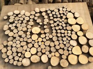 200 small log slices, decorative logs, display, hardwood