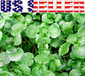 200+ ORGANICALLY GROWN Watercress Seeds Heirloom NON-GMO Delicious Healthy USA !