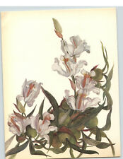 1922 Color Book Plate Framable Orchid Images Coelogyne cristata White & Gold