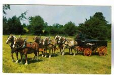 OKEEFE'S BEER WAGON ,6 IN HAND BELGIANS,1950-60'S POSTCARD, HUGE DRAFT HORSES