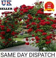 Rose Seeds 30x Climbing Red Rose Flower Seeds Garden Plant,  UK Seller