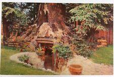 Eternal Tree House Redcrest in Scotia, California Hwy 101 Chrome Postcard Unused