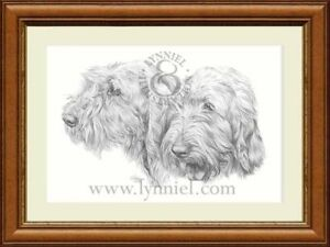 SPINONE Giclee pencil dog print by Lynn Paterson