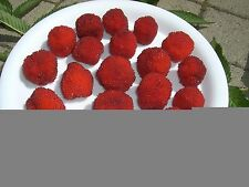 Obst-Pflanzen für gemäßigtes Klima