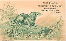 O.B. Deane, Taxidermist & Bird Dealer Springfield MA, Victorian Tradecard 1880's