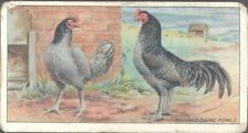 Ogdens - Poultry, 2nd Series - 37 - Madras Game Fowls
