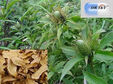 Dr T&t Pez Atractylodes Rizoma Bai Zhu 100g Dry Herbs