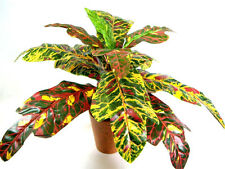 Colourful Potted Artificial Silk Crotons Plant ~ House Plant