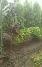 Thuja Brabant( keine smaragd), 250/300/400/500/600cm,Lebensbaum, PFLANZBERATUNG