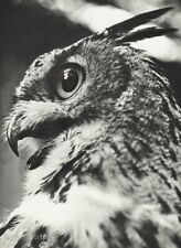 1939 Original Ylla Camilla Koffler Grand Duke Owl Bird Animal Vintage Photo Art