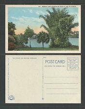 1920s BAMBOO CANE GROWNG ON EDGE OF LAKE IN FLORIDA POSTCARD