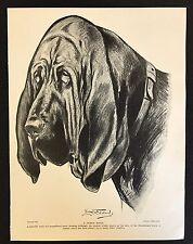 Original 1934 Dog Print / Bookplate - BLOODHOUND, A Noble Head, Lionel Edwards