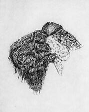 GEOFFREY LASKO - KERRY BLUE DOG  LISTED ARTIST ORIGINAL ETCHING -S&N - FREE SHIP