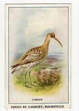 Antique Cadbury's Bournville cocoa advertising card, curlew, bird, Reward Card