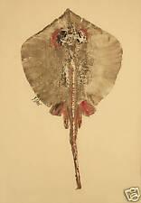 Gyotaku Fish Rubbing - Stingray