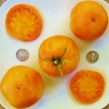 Golden Queen - Organic Heirloom Tomato Seeds - Gorgeous Slicer - 40 Seeds