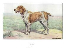 1930 Art Francois Castellan France Dog Watercolor Print Spinone Spinoni Italiano
