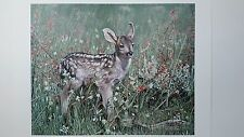 Charles Frace, Fresh Start, Mule Deer Fawn, Signed and Numbered Print