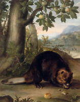 "perfect oil painting handpainted on canvas"" A beaver ""N13797"