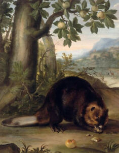 """perfect oil painting handpainted on canvas"""" A beaver """"N13797"""