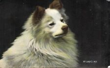 My Lady's Pet. Gorgeous Dog. 1907 Vintage Postcard W & K 998.B (GRN)