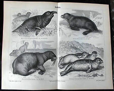 Kunstdrucke mit Zoologie-Motiv