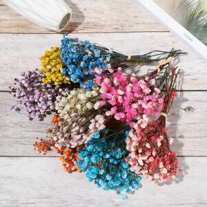 Props Pflanzliche Steme Echte Blume Mini Baby Natürliche getrocknete Bouquets
