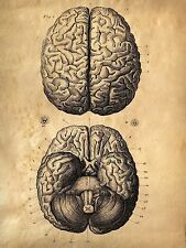 Framed Vintage Medical Print – The Human Brain (Picture Poster Art Anatomy Face)