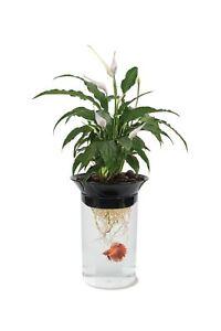 Penn Plax Aquaponic Betta Fish Tank Promotes Healthy Environment for Plants a...