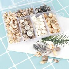 About 100Pcs/Box Natural Conch Shells Conch Corn Screw Wall Decoration Seashells