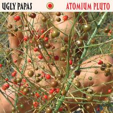 Ugly Papas – Atomium Pluto  CD